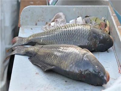 يقلل الموت بنسبة 13%.. تعرف على السمك الأكثر فائدة