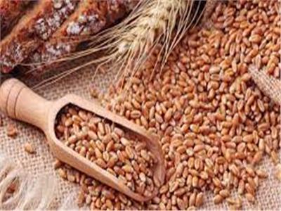 «التموين»: إيقاف استلام القمح المحلي من المزارعين اليوم وغدًا