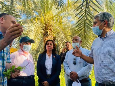 الزراعة: تشغيل معمل إنتاج  «طفيل الترايكوجراما» بالواحات البحرية