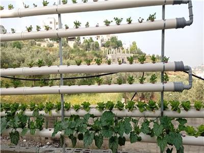 حكايات  زراعة بدون تربة.. أسطح منازل القاهرة تطير إلى عواصم عربية   صور