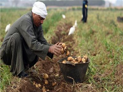 الزراعة: نسعى لزيادة القدرة الإنتاجية لصغار المزارعين
