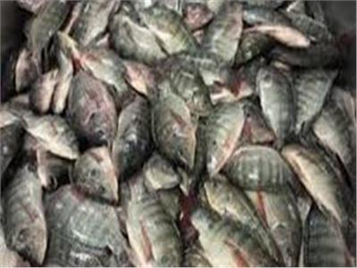 ضبط 7 أطنان سمك فاسد في القاهرة
