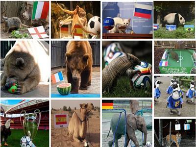 حكايات  «عرّافين» في كرة القدم.. من الأخطبوط «بول» إلى قطط السرقاط