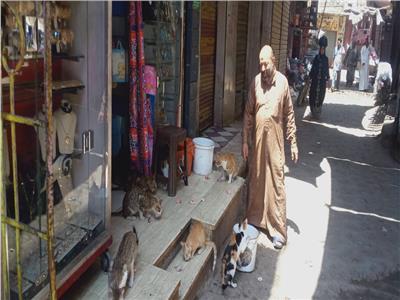 حكايات  مشمش وأخواتها.. «ناصر» يطعم قطط وكلاب الشوارع بمصر والسعودية