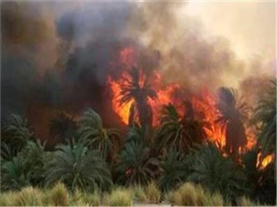 السيطرة على حريق شب في حشائش بترعة الإبراهيمية ببني سويف