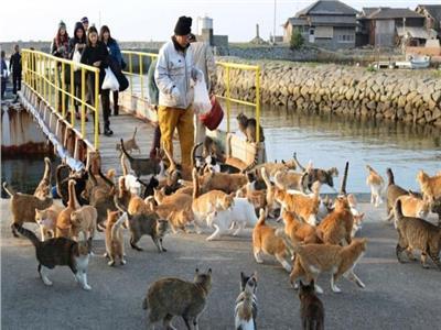 حكايات| «فورتادا».. جزيرة تسيطر عليها القطط في البرازيل