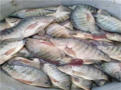 استقرار أسعار الأسماك في سوق العبور .. اليوم 16 أكتوبر