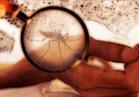 الصحة: لا وفيات بحمى الضنك..وقتل «الحشرة الناقلة» خلال أسبوعين