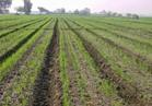 5 فوائد للزراعة على المصاطب