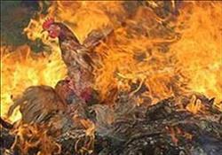 اخماد حريق بمزرعة دواجن بالشيخ زايد