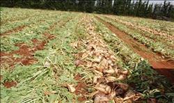 «الفلاحين» تطالب برفع توريد أسعار محصول البنجر