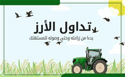 إنفوجراف.. حلقات تداول الأرز بدءا من زراعته وحتى وصوله للمستهلك
