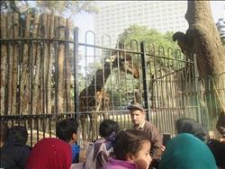 حديقة الحيوان بالجيزة.. فسحة الغلابة بـ«5 جنيهات» |صور وفيديو