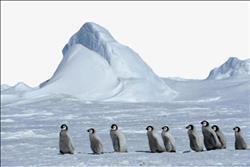 علماء بيئة يسعون لإنشاء ملاذ بحري بالمناطق القطبية الجنوبية لحماية الحيوانات