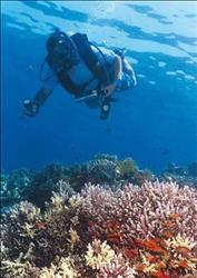 الثلاثاء.. بدء فعاليات الملتقى الاقتصادي العربي الأول للسياحة البيئية والمحميات