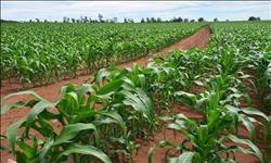 حملات التوعية سلاح «الزراعة» لمواجهة التقلبات الجوية على المحاصيل