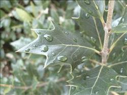 طرق تجنب آثار الصقيع والبرودة على النباتات