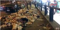 لقطة اليوم| القمامة تشوه الوجه السياحي لشارع الهرم