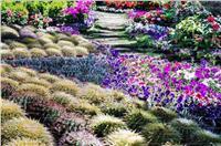 بحضور عدد من الوزراء.. افتتاح «زهور الربيع» بـ«الأورمان» اليوم