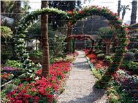 «الورد جميل»| انطلاق معرض زهور الربيع بحديقة الأورمان .. صور