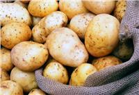«التجارة» تنفي صدور حظر روسي على استيراد البطاطس المصرية