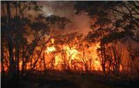 حرائق الغابات تجبر السكان على الفرار في ولاية فيكتوريا بأستراليا