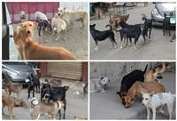 القتل والرفق وبينهما «الخصي» كيف تواجه الدولة 18 مليون كلب ضال؟