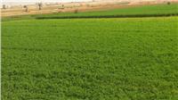 «الزراعة»: تخصص خطا ساخنا لبلاغات التعدي على الأراضي خلال الانتخابات
