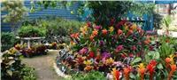 فيديو| تعرفي على نباتات الطهي بمعرض الزهور