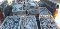 «الزراعة»: ضبط 3.7 طن من الأسماك غير الصالحة بالغربية