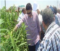 صور| «الزراعة» تواصل حملات المرور على زراعات القطن والذرة