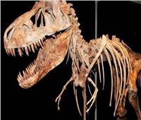 اكتشاف بقايا أقدم ديناصور عملاق معروف في الأرجنتين