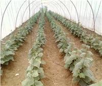 صور| «الزراعة» تواصل حملات المتابعة وتفحص «الصوب» بالدقهلية