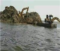 «الزراعة» تواصل حملات تطهير البحيرات لزيادة الثروة السمكية