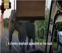 فيديو| فيل يسطو على أتوبيس بقوة للحصول على «موز»