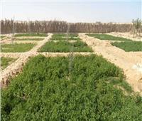 «الإصلاح الزراعي» أهم مكتسبات ثورة 23 يوليو