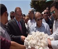 وزير الزراعة يفتتح «موسم جني القطن» في بني سويف