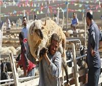 محافظ أسوان يرفع حالة الطوارئ استعدادا لعيد الأضحى المبارك