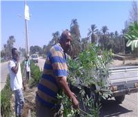 «شارك – نظف» لليوم الثالث بمدينة الطود بالأقصر