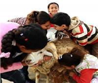 4 أمراض خطيرة قد تصيب طفلك بسبب «خروف العيد»