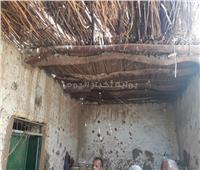 صور| النمل الأبيض يحتل منازل الأقصر .. ووكيل الزراعة يكشف السبب