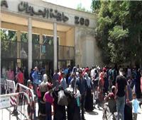 حديقة الحيوان: الإقبال ضعيف لانشغال المواطنين بالذبيح أول أيّام العيد