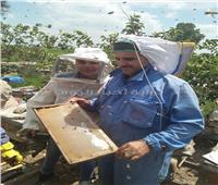 «بنها العسل».. رحلة منتجات النحل من «الصندوق الخشب» لأوروبا