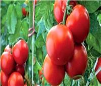خبير زراعي: تفعيل الزراعة التعاقدية روشتة للحد من انفلات الأسعار