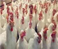 بالتفاصيل.. أسعار اللحوم والدواجن بالمجمعات بعد الزيادة