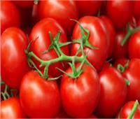 «خبير زراعي»: لا توجد طماطم مسرطنة وما يتردد «شائعة»
