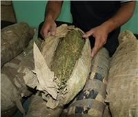 ضبط 6 تجار مخدرات بالقليوبية