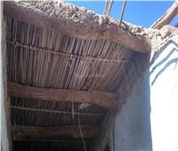 إجراءات وقائية ومطالب بزيادة الدعم.. «النمل الأبيض» يهدد 602 منزل بالوادي الجديد