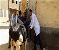 فيديو  «الزراعة» تكشف عقوبة امتناع تسجيل وترقيم الماشية