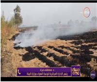 فيديو| البيئة تكشف أسباب انخفاض حريق قش الأرز